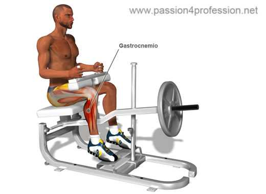 polpacci calf machine