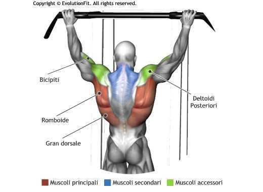 Mappa muscolare dorsali trazioni avanti