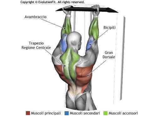 Mappa muscolare dorsali trazionii sbarra avanti