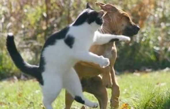 cane e gatto pugno