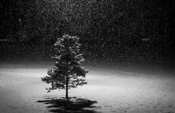 albero neve