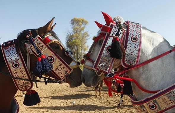 cavalli hung gar