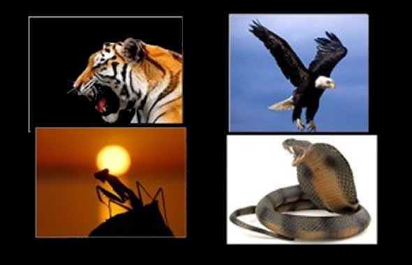 stili di kung fu animali