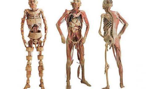 corpo umano