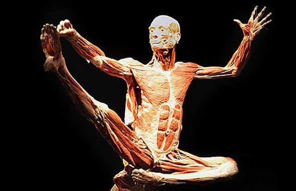 movimento body