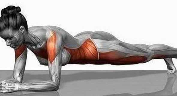 plank disegno