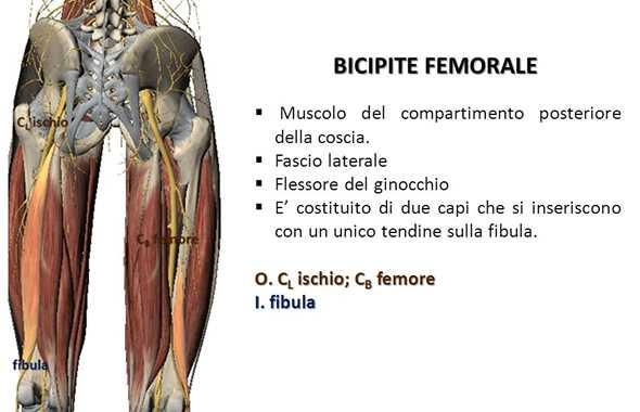 bicipiti femorali