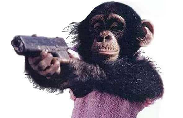 scimmia pistola