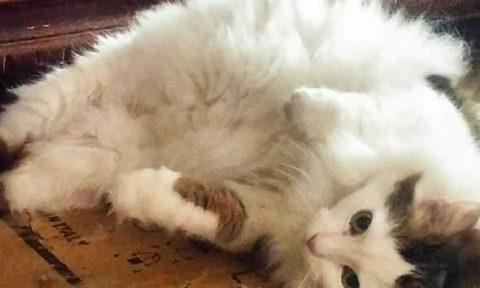 gatto Chiara