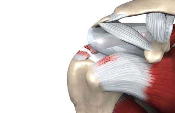 spalla muscoli