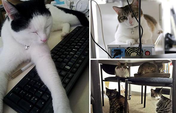 gatti al lavoro