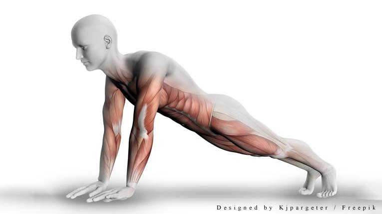 muscolatura piegamenti