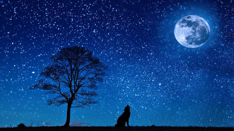 luna lupo zen