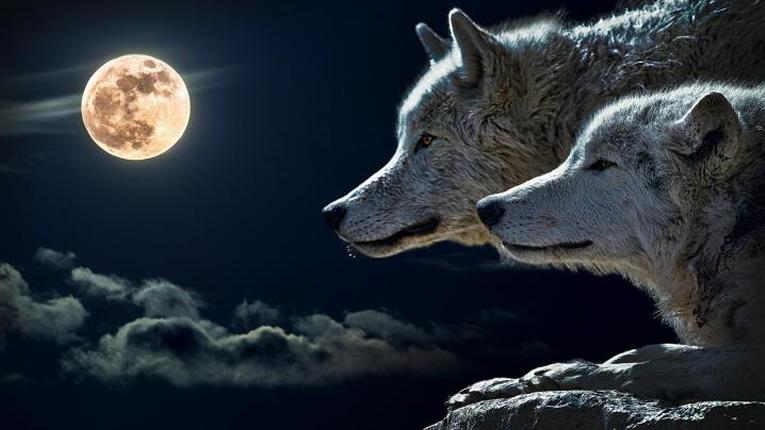lupi luna zen